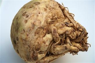 A celeriac root